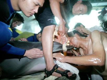 Delfino ingoia plastica