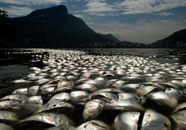 pesci brasile