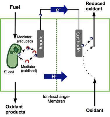 biobatteria