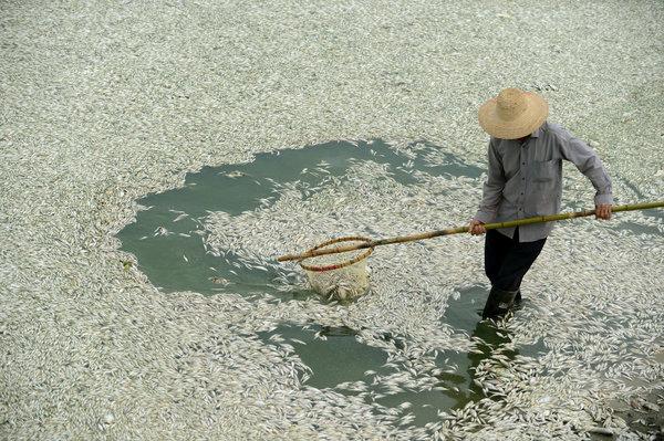 moria pesci cina 600x399